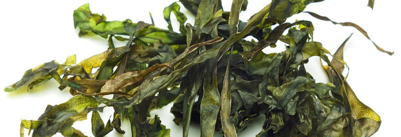 Japanese seaweeds