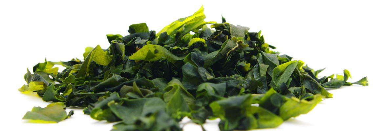 European seaweed