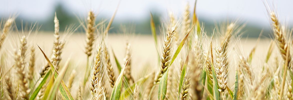Cereals in grain and snowflake