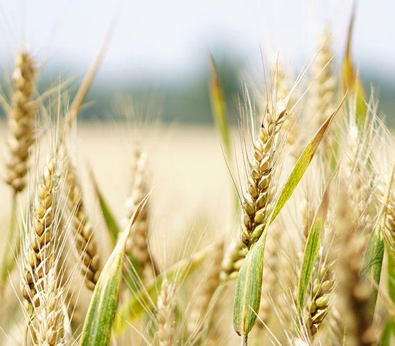Cereales en grano y copo